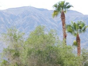 6258 Bayview Circle Las Vegas Nevada (4)